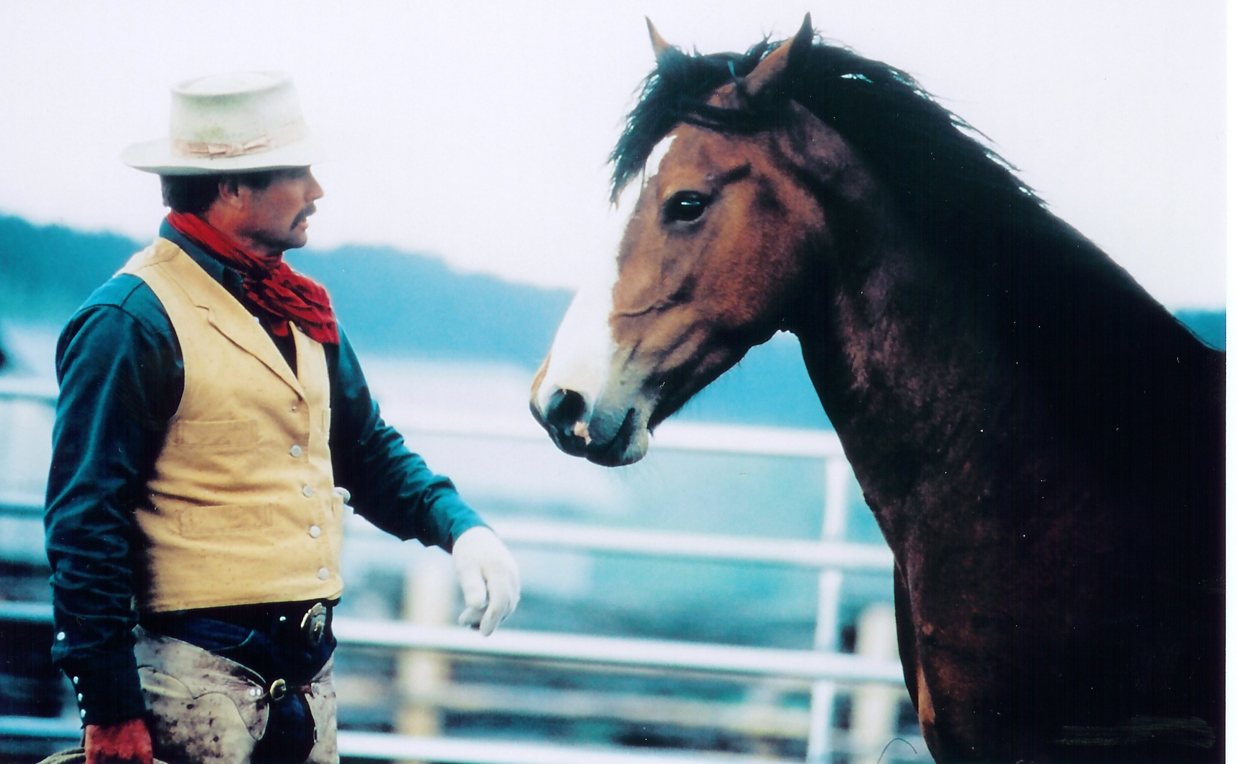 HORSE WHISPERING WILL CHANGE YOUR LIFE -