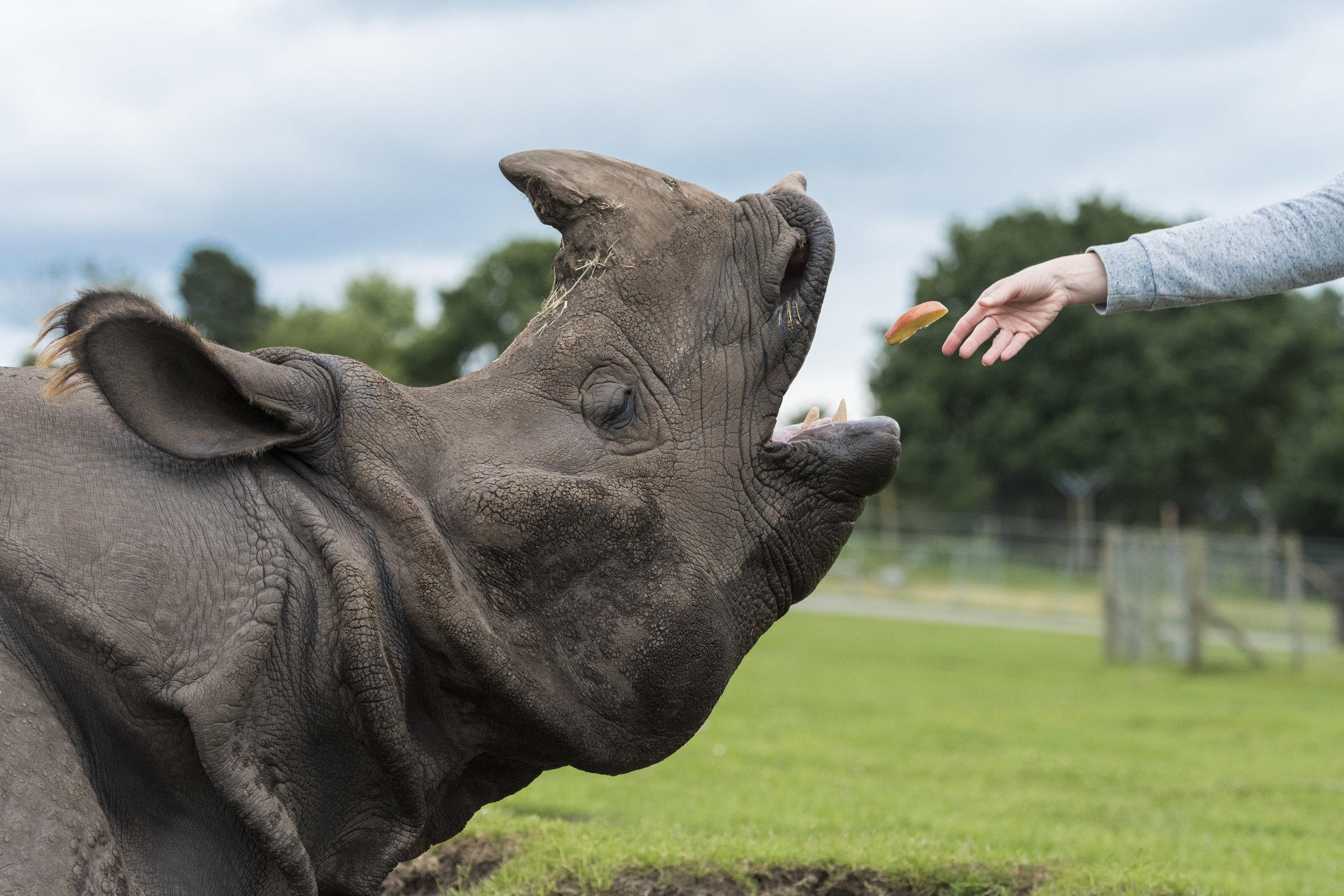 Rhino Feed 05.jpg