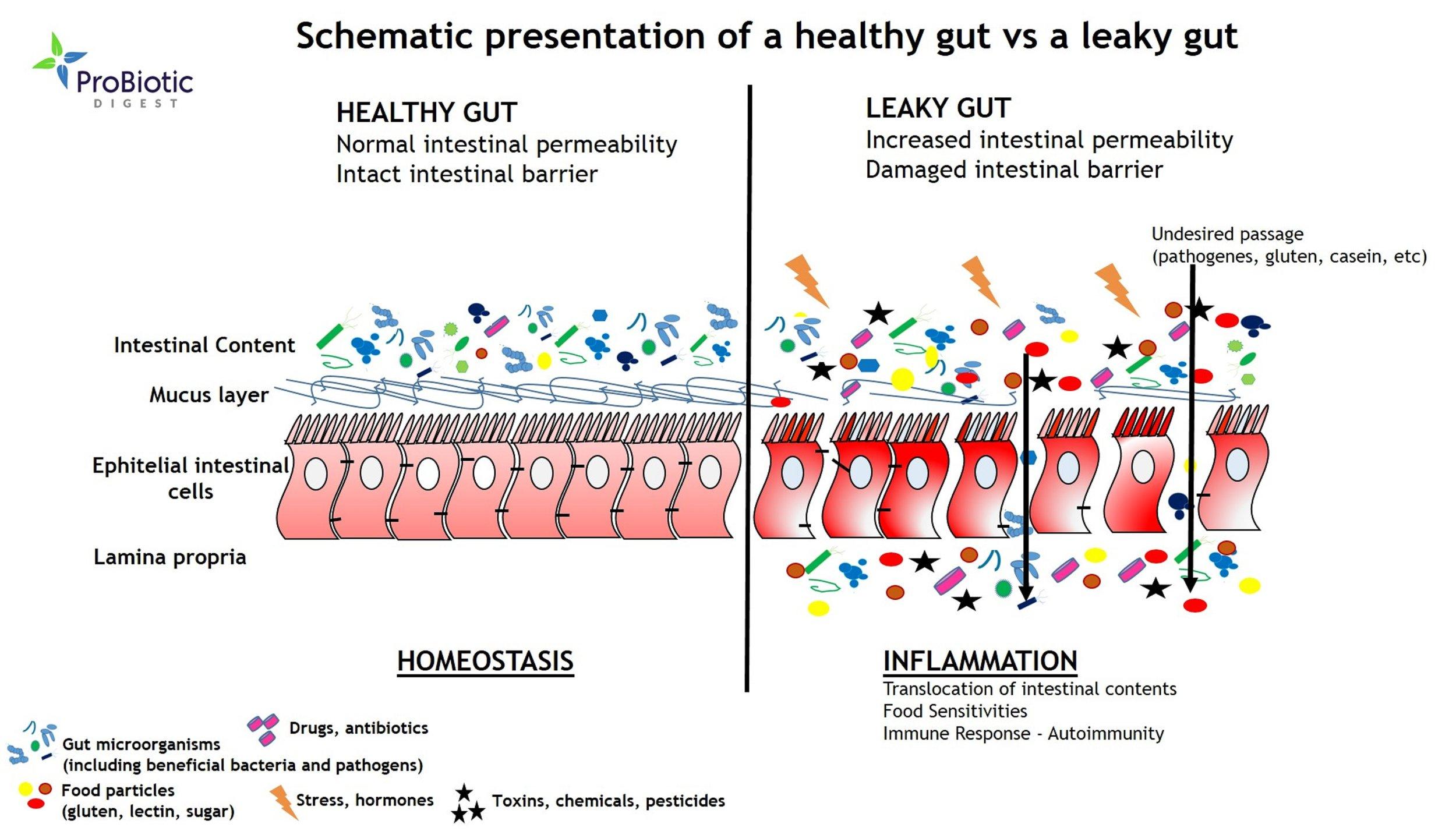 Source: Probiotic Digest