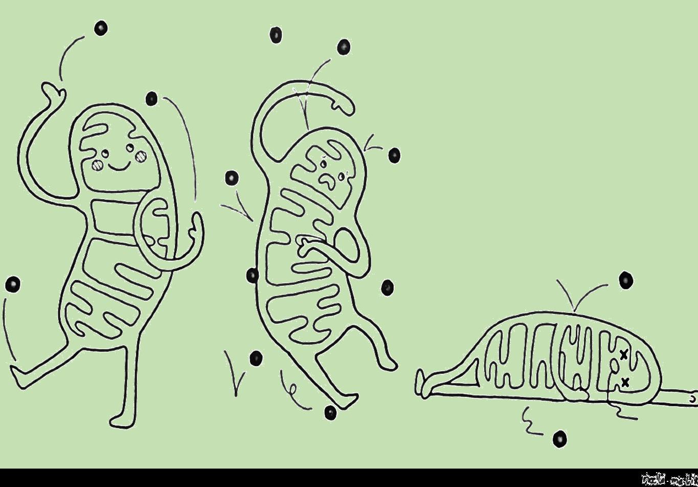 MitoCartoonGreen.png
