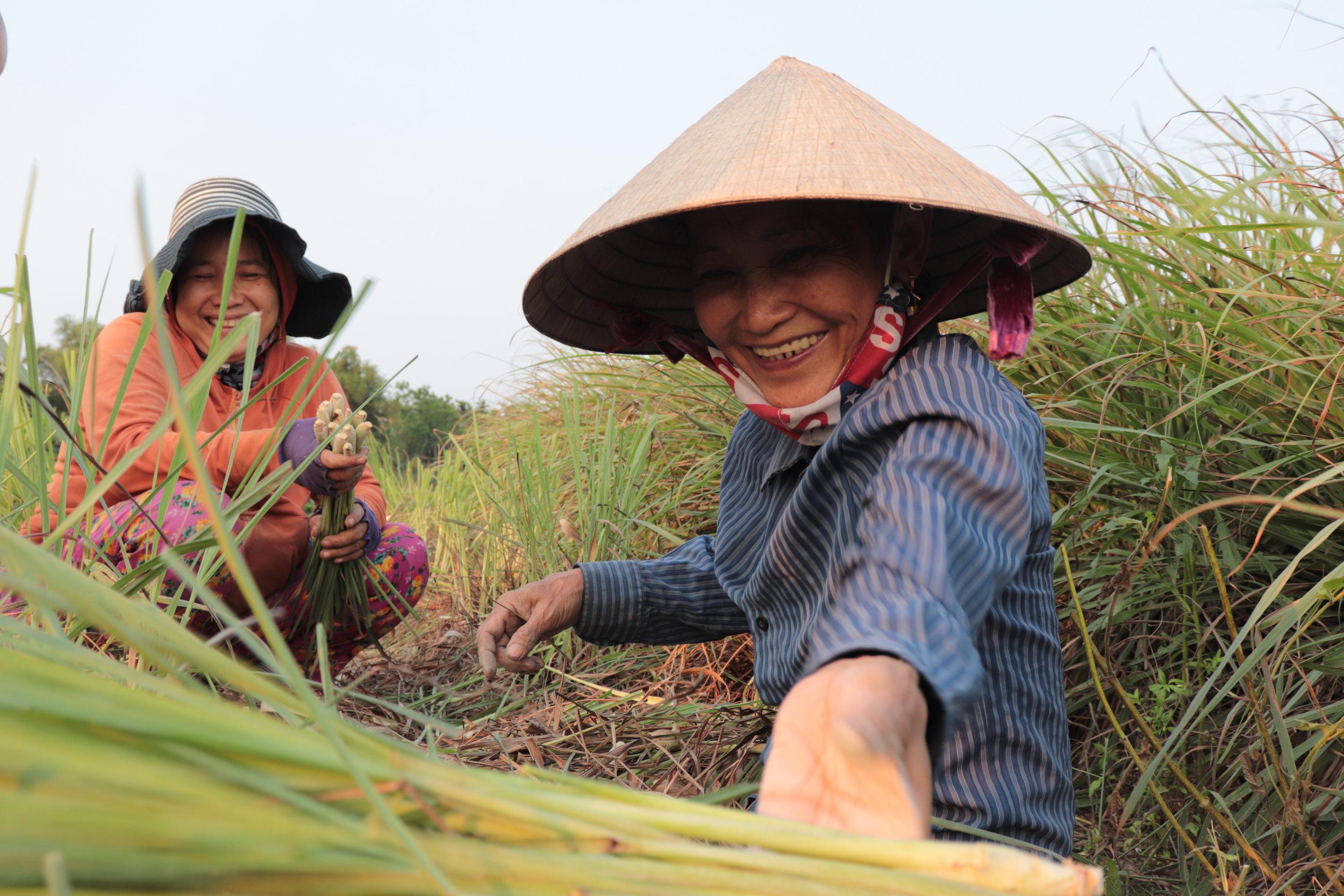 Hoi An - Beautiful Women working on Lemongrass Fields