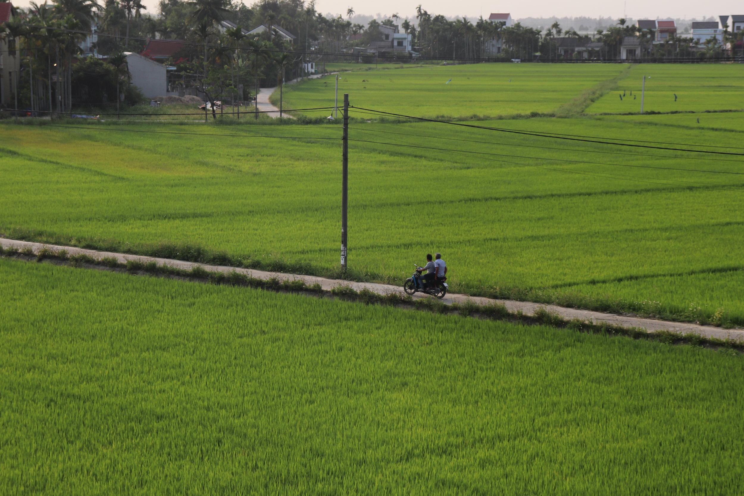 Hoi An - Rice Fields