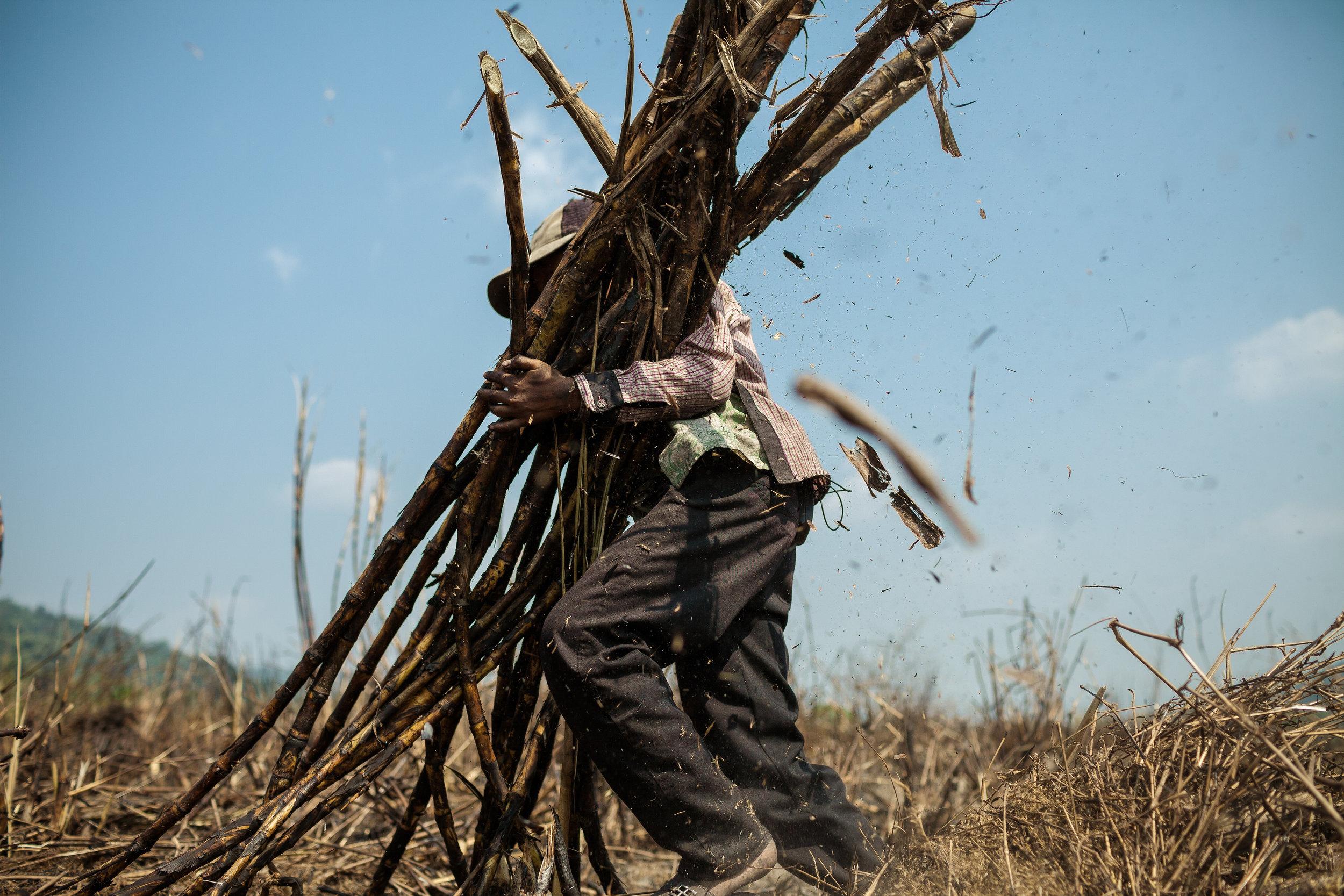 Image: Sugar plantation of Srei Ambel, Koh Kong - Cambodia. 16 Jan. 2013 © Thomas Cristofoletti / Ruom