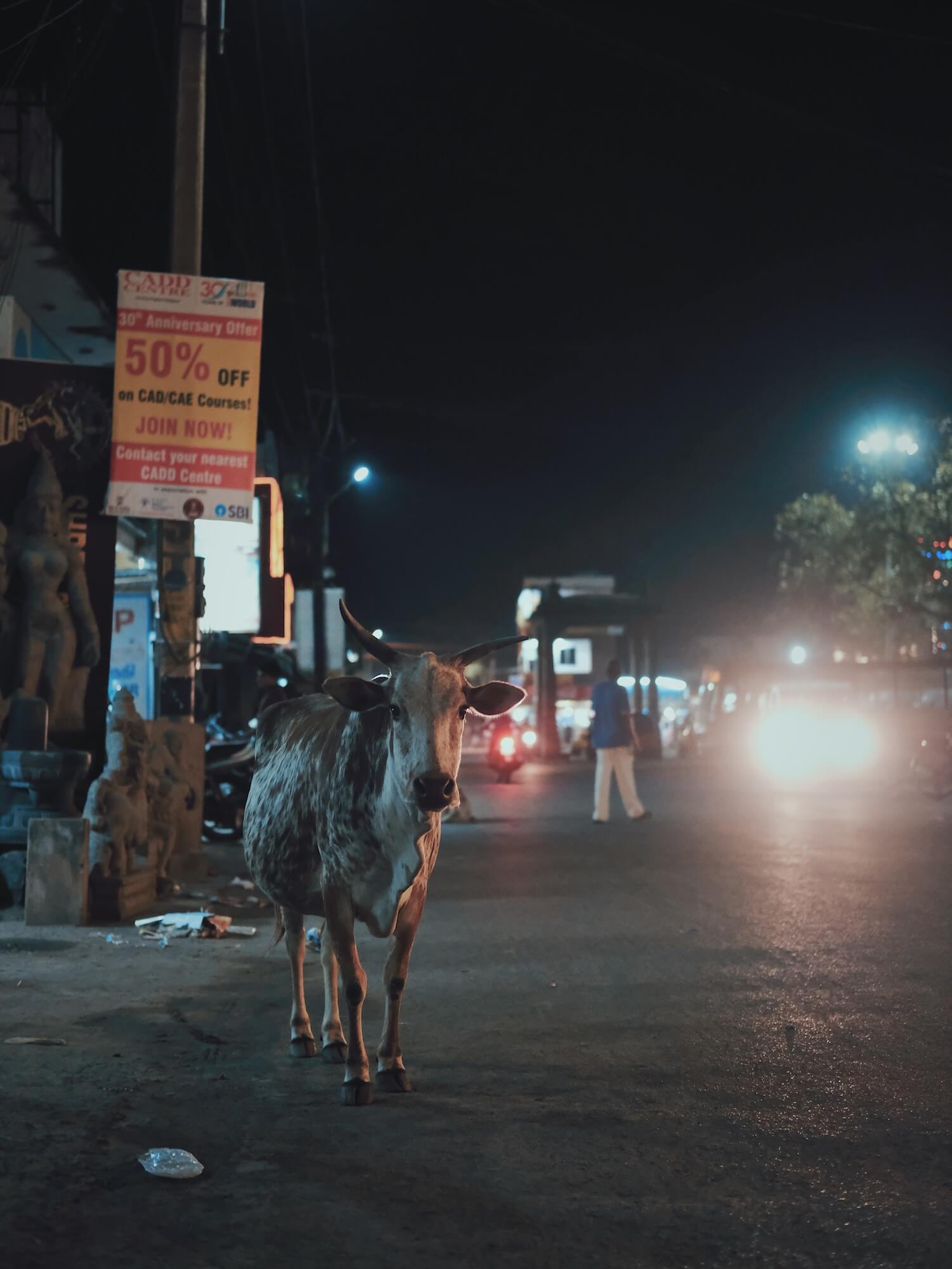 indien-2018-1.JPG