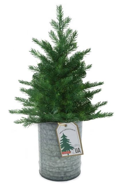 THE URBAN AGRICULTURE CO. Live Christmas Tree Seeds in a Tin Kit $30