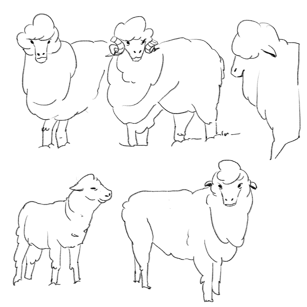 Marino Sheep design for The Woolmark Company