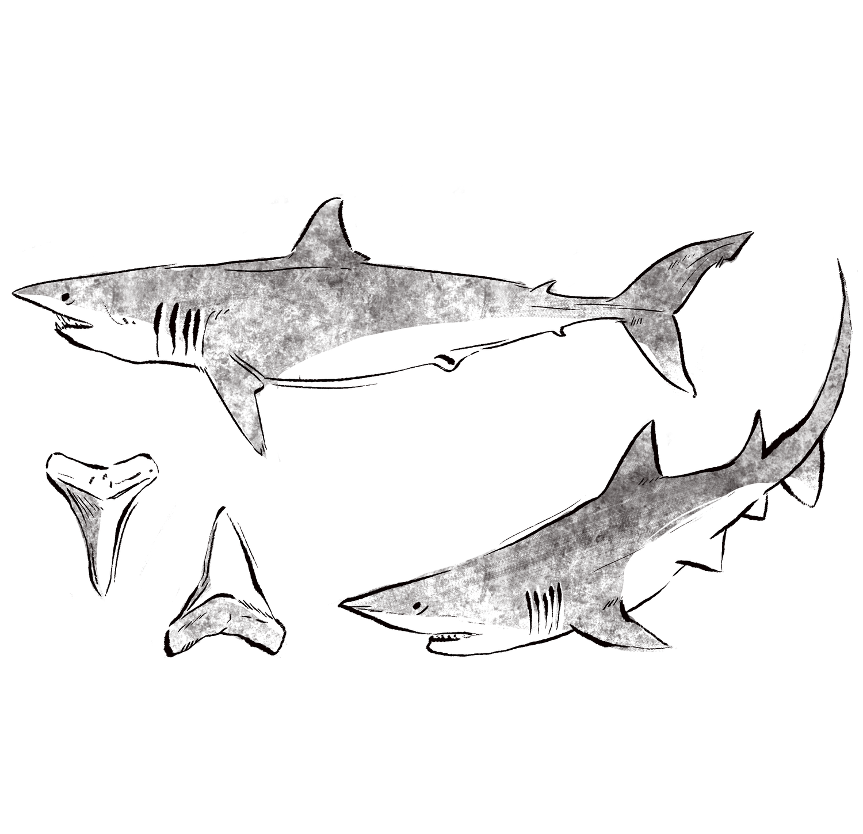 sharksv2.png
