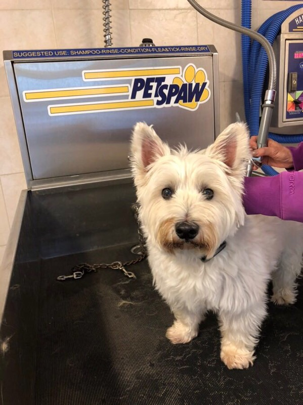Meet Toby! He loves his baths at the Pet Spaw!