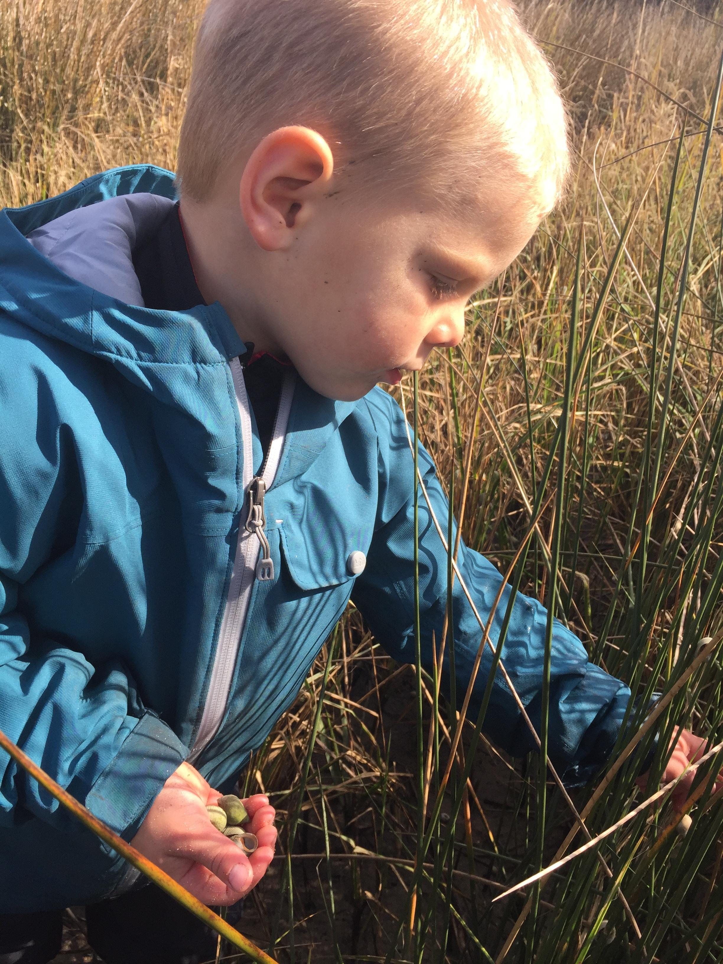Collecting Marsh Perriwinkles.