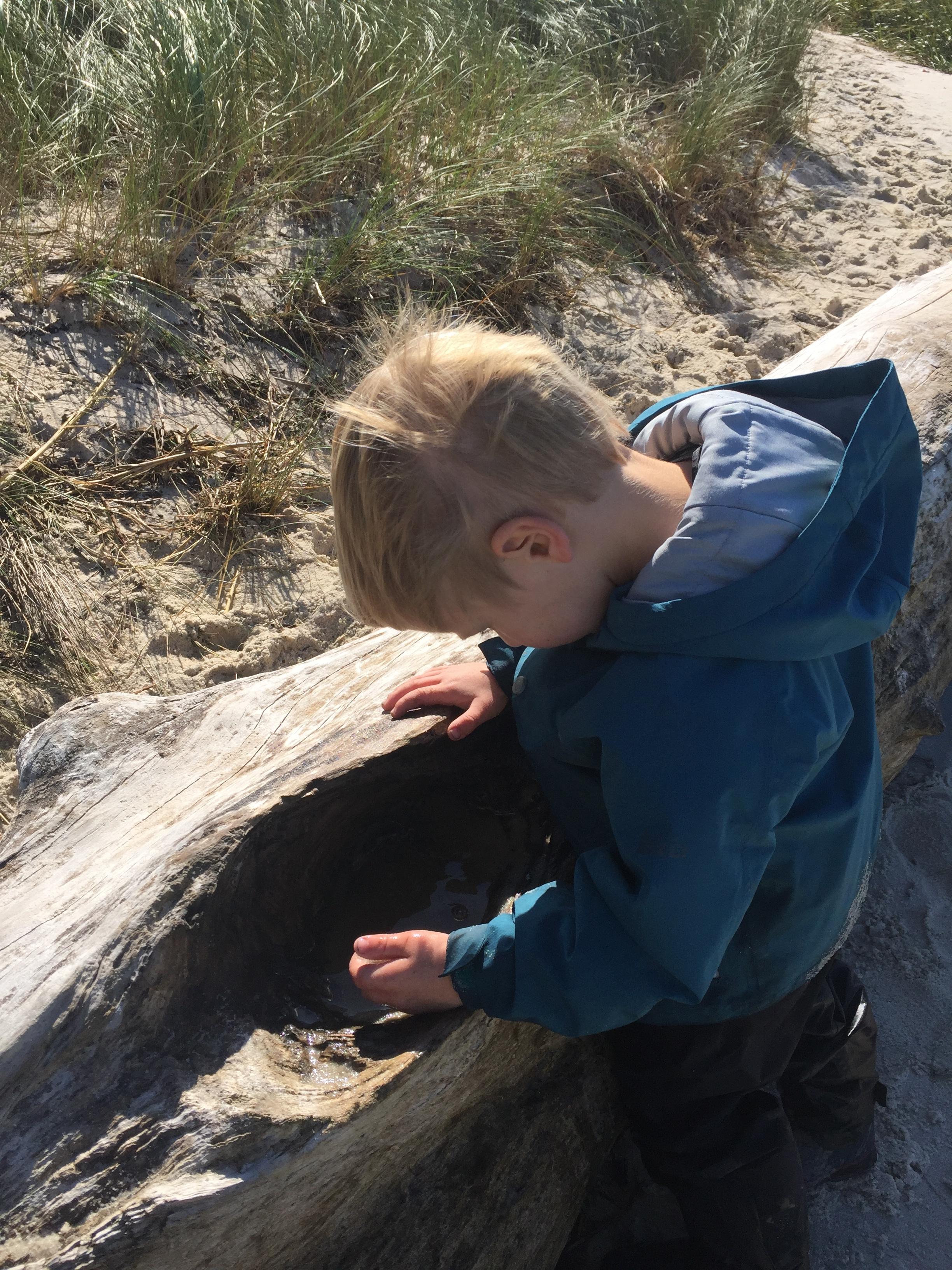 Exploring a tide pool in a log.