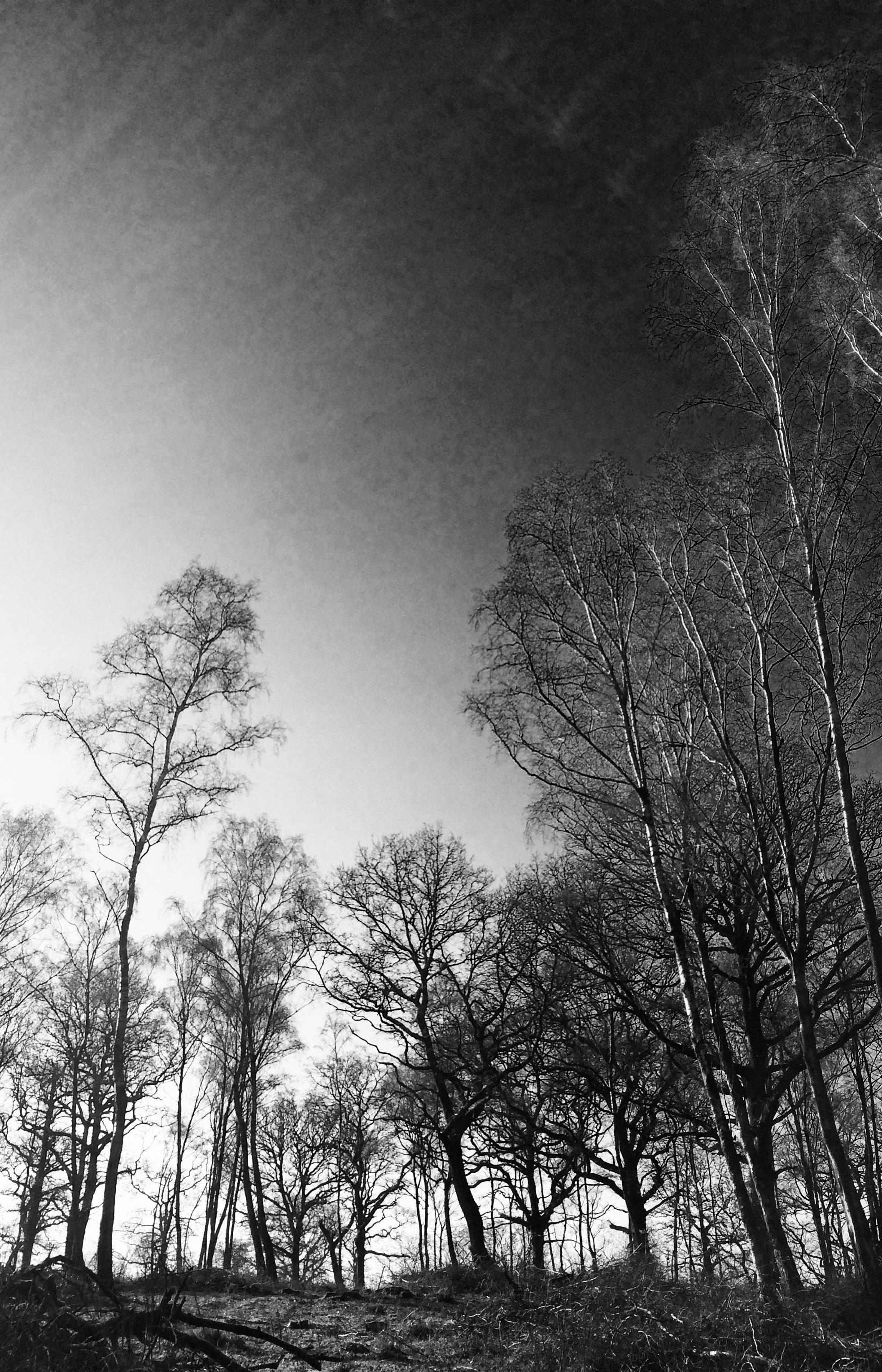 photo-SQS_DK_lazercake_0141.jpg