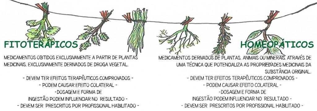 fitoterapia.jpg