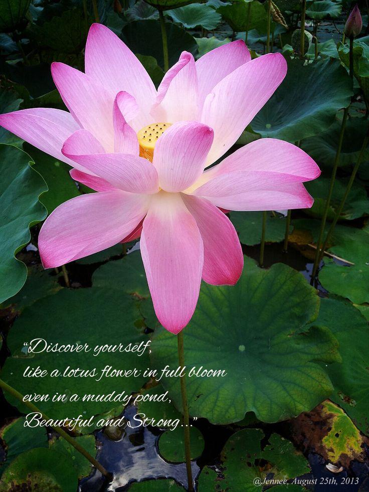 medium lotus flower