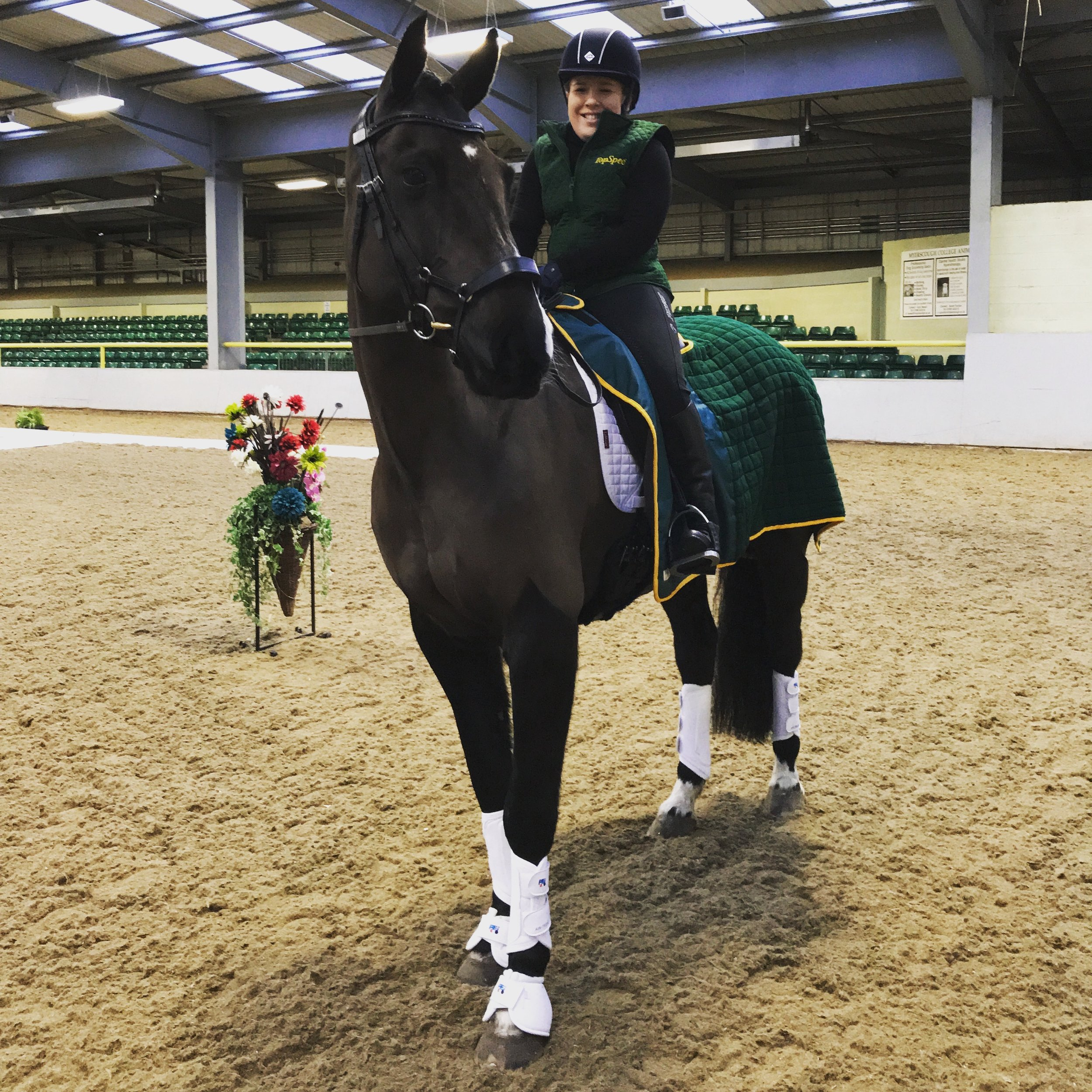 The Horses - Learn more about Natasha's horses and how they have helped Natasha become the rider that she is today