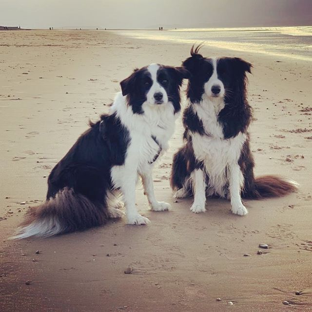 Missing these two gorgeous girls so much 😍 My mum's taken them with her, up to Scotland, whilst she's away working!!! 🏴󠁧󠁢󠁳󠁣󠁴󠁿 Sophie and Summer are loving playing on the beach 🏖😘🌊 #bordercollies #sophie #summer #dogsofinstagram #dogs #bordercollielife #bordercollieworld #bordercollielovers