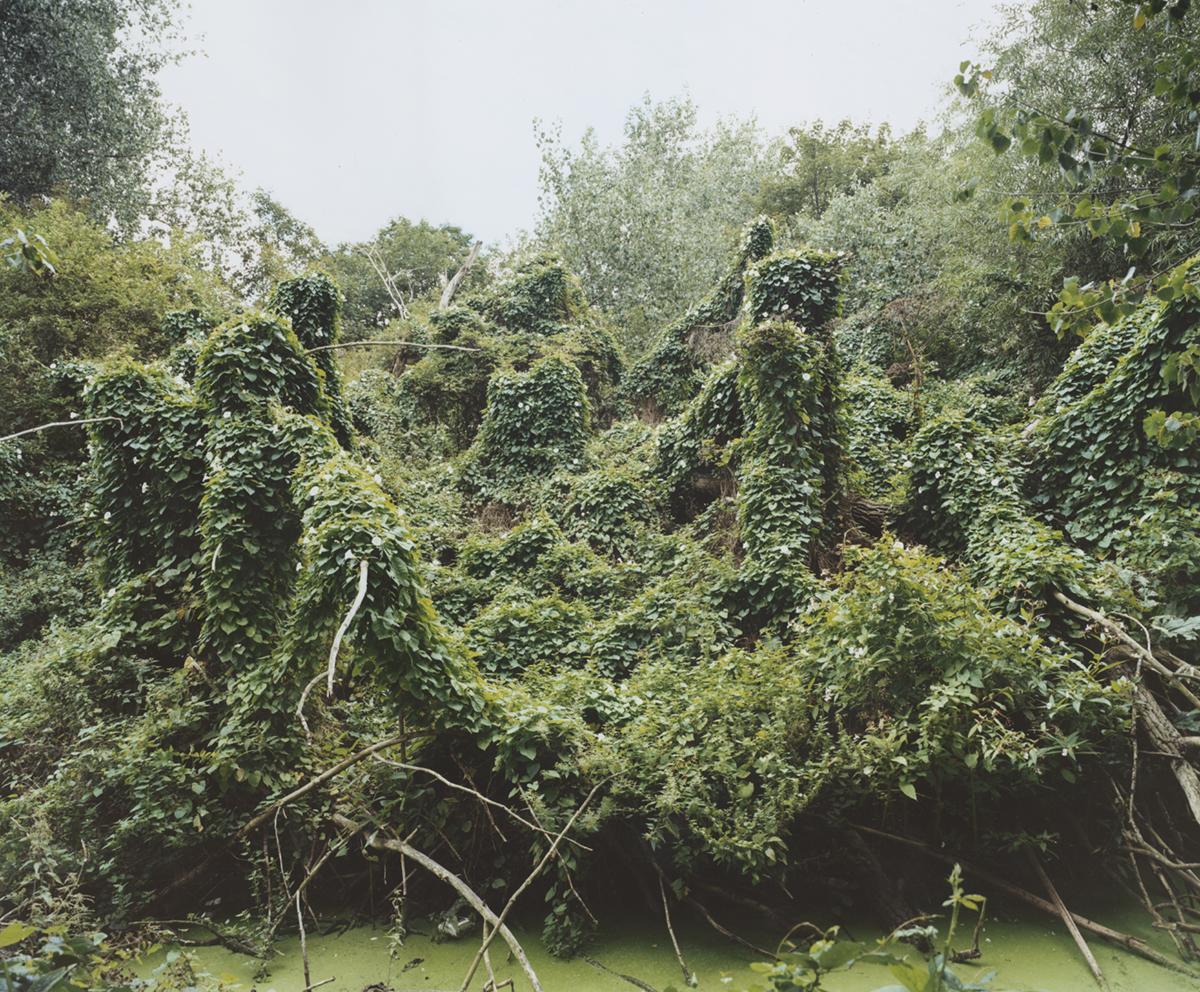 Summer Spider Tree.jpg
