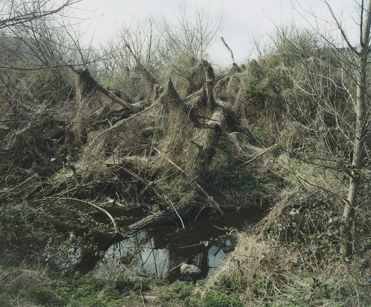Winter Spider Tree.jpg