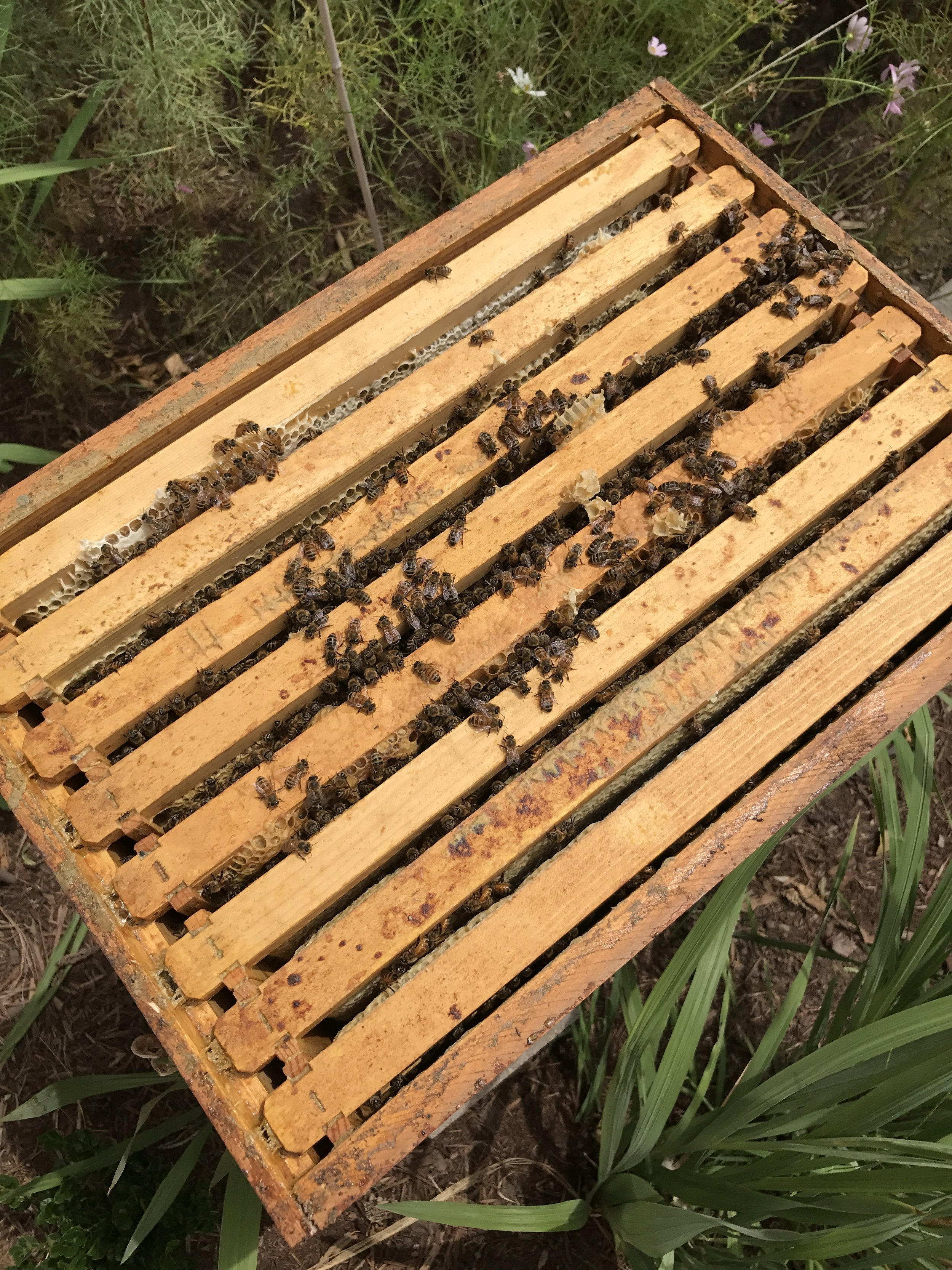 Considerations Before Becoming a Beekeeper | @beesandbubbles