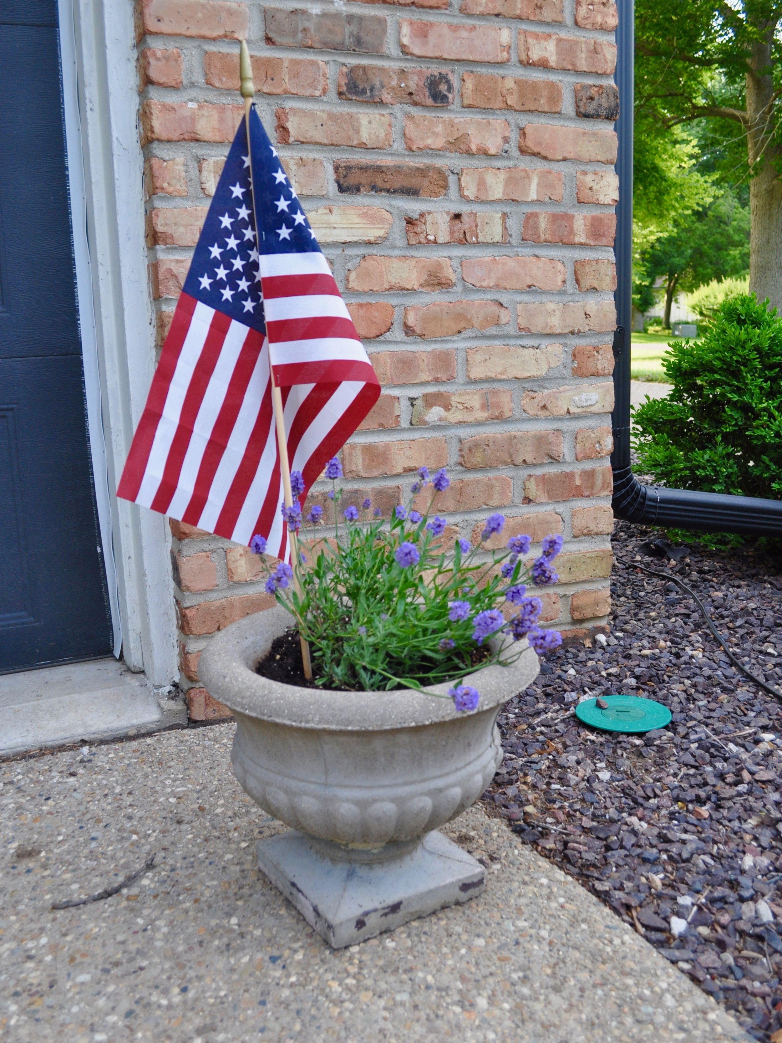 Happy Independence Day | @beesandbubbles