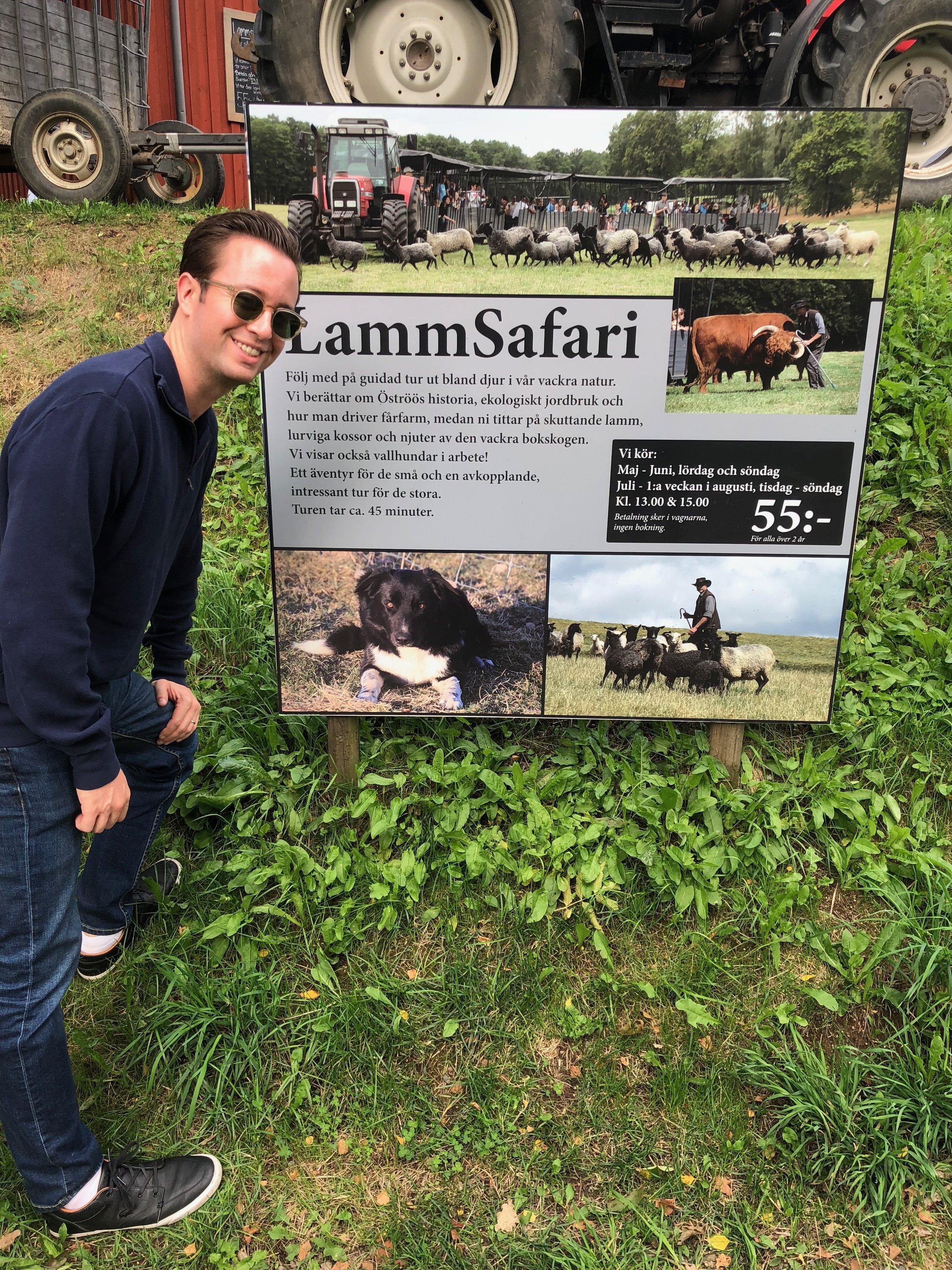 At the farm, you can hop on a lamb safari