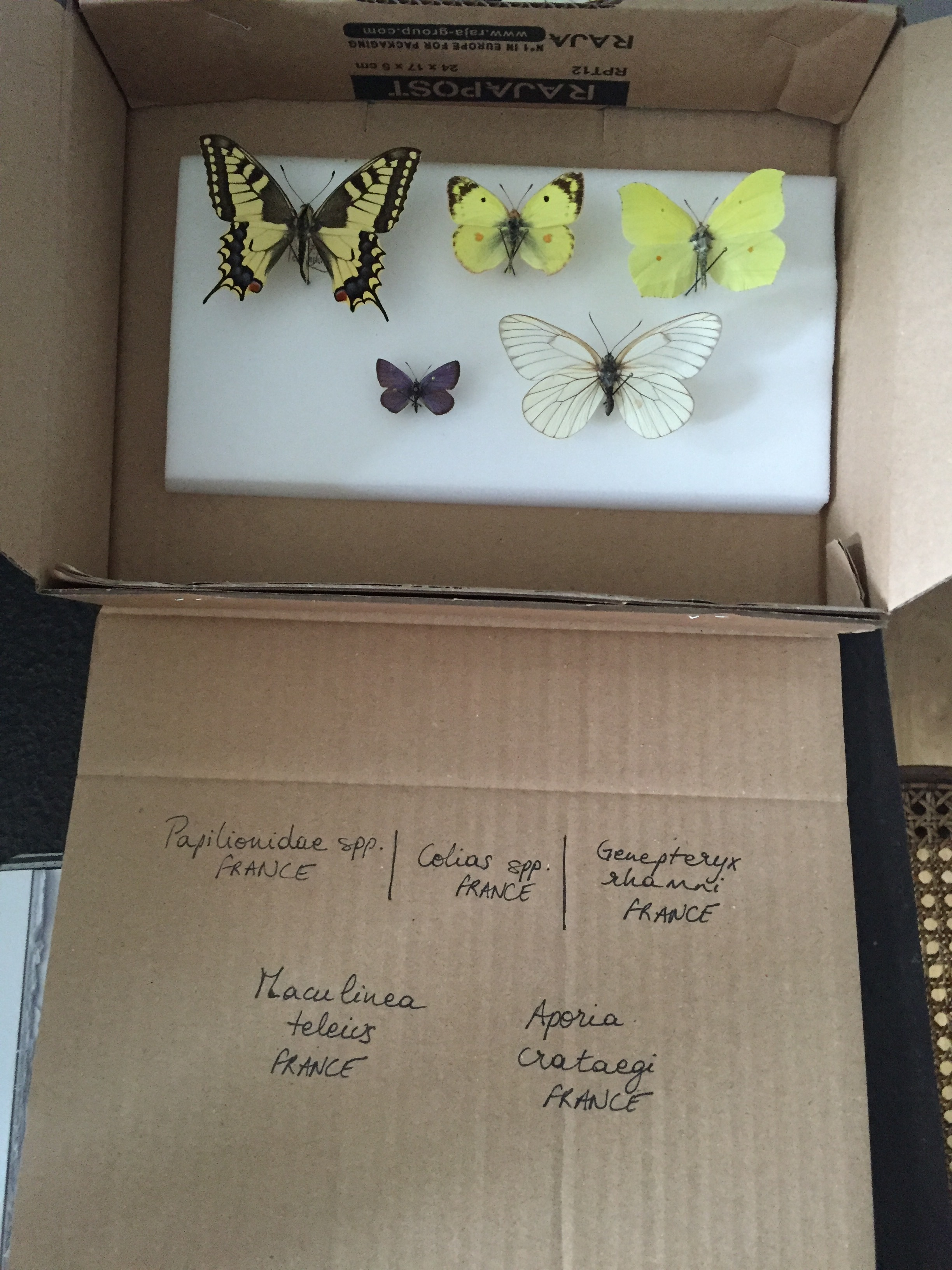 Making a Butterfly Dome   @beesandbubbles
