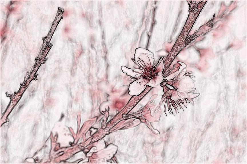 tpowell sketch1 cherry.jpg