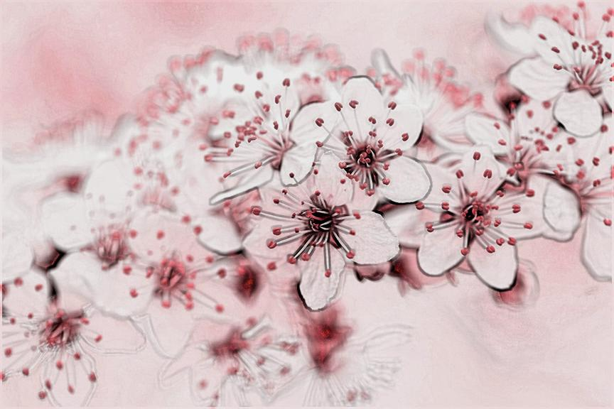tpowell sketch4 cherry.jpg