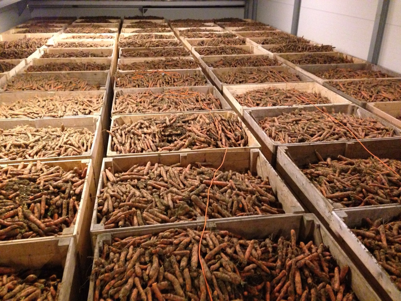 Carrot Storage
