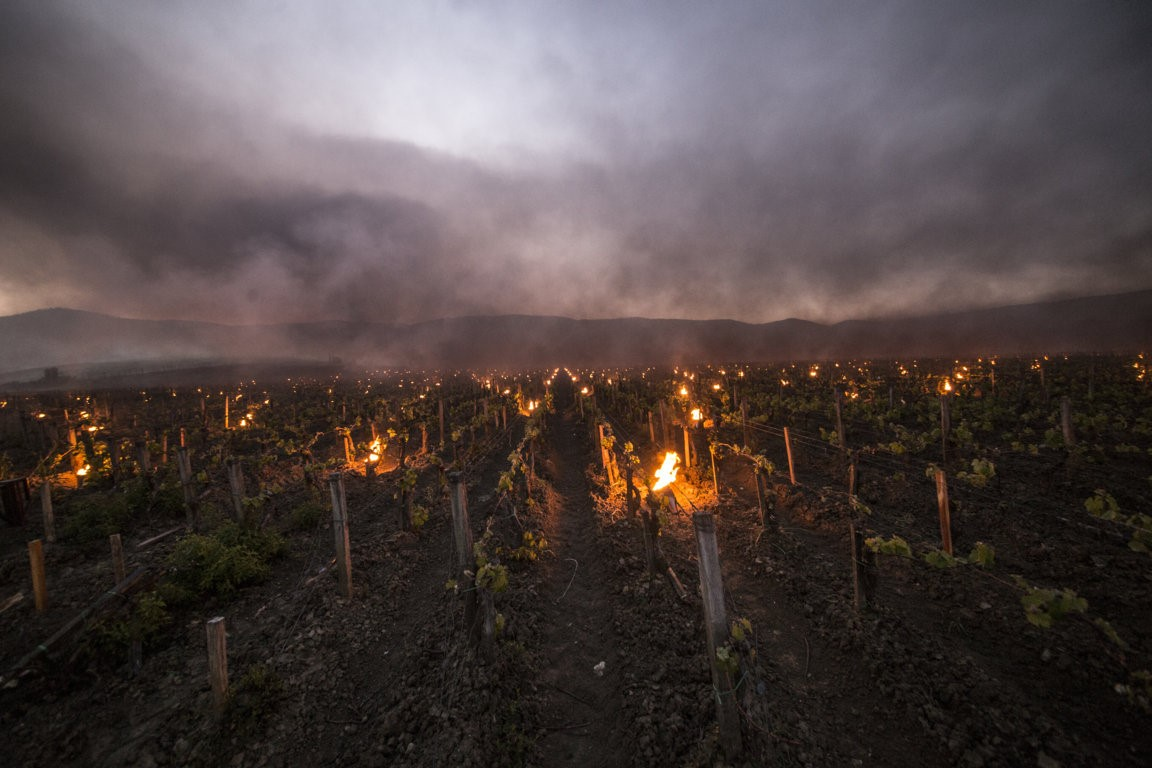 Trinoro vineyard close up with torches Spring 2019 2.jpg