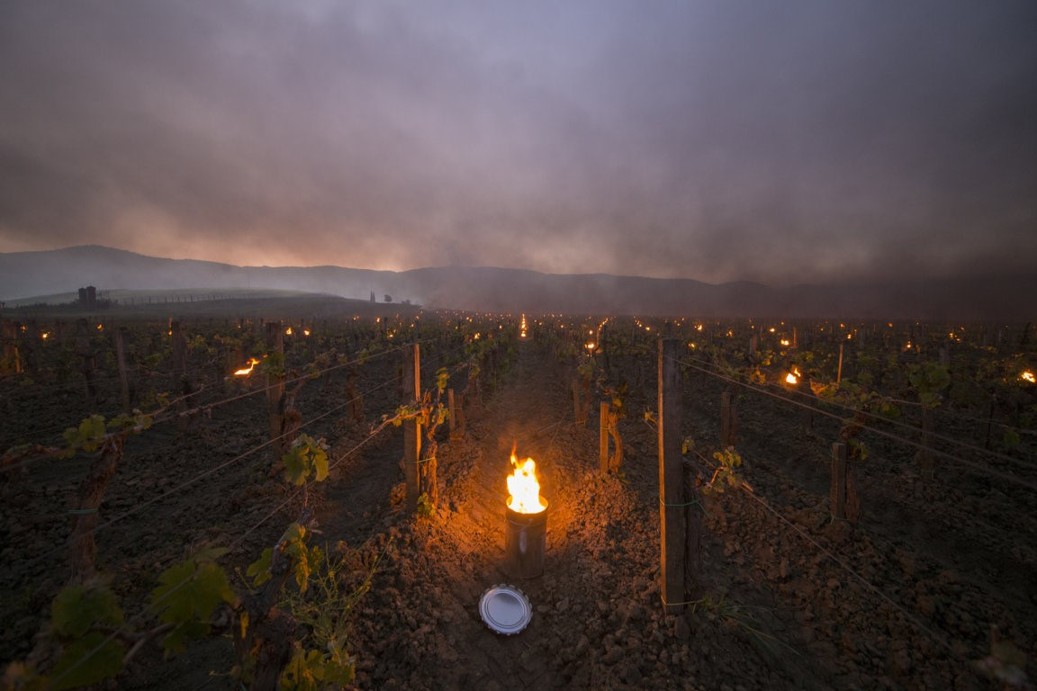 Trinoro vineyard close up with torches Spring 2019 3.jpg