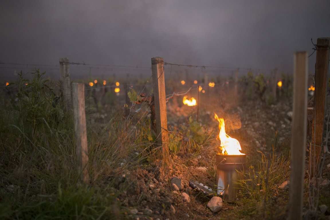 Trinoro vineyard close up with torches Spring 2019 4.jpg