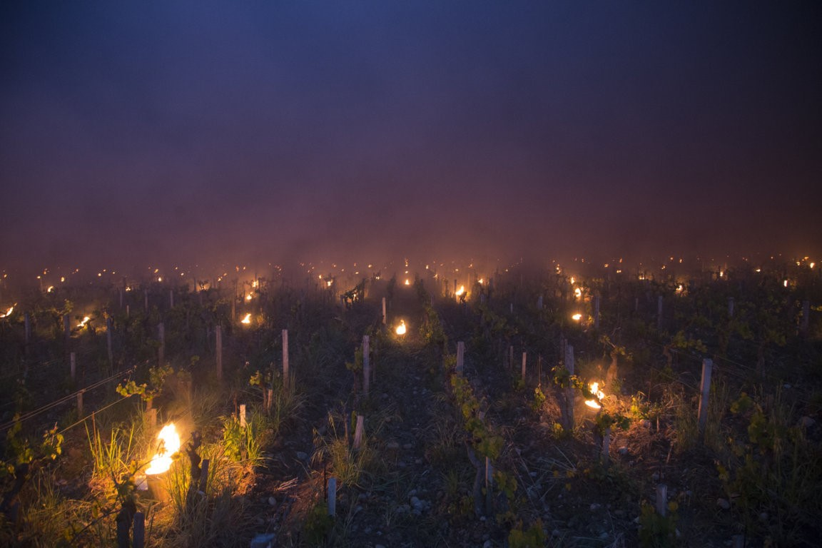 Trinoro vineyard close up with torches Spring 2019.jpg