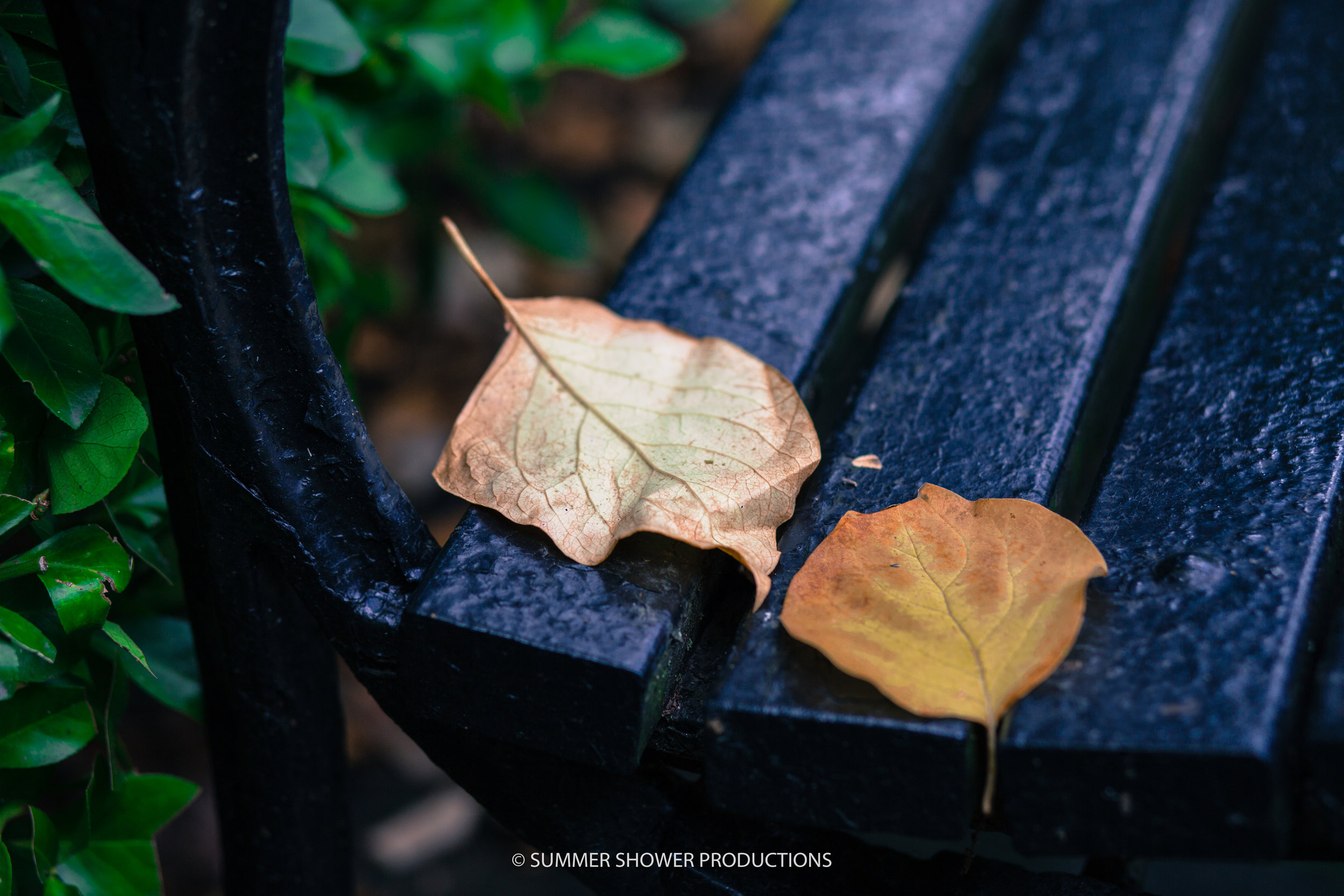 leaf 1.jpg