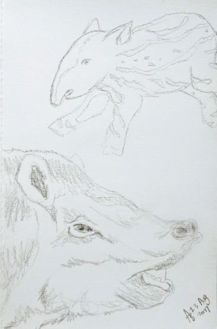 Copy of tapir doodle.jpg