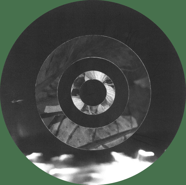 Circles_Fibonacci_LightStreaks_Leaves_Crop&Trim.png