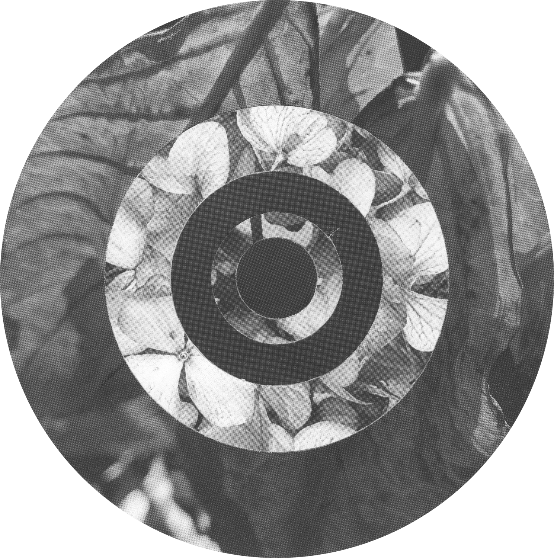 Circles_Leaves_Hydrangea_Crop&Trim.png