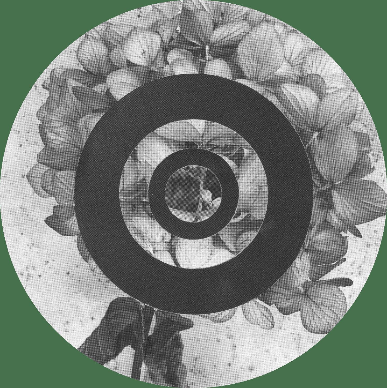 Circles_Leaves_Hydrangea_No2_Crop&Trim.png
