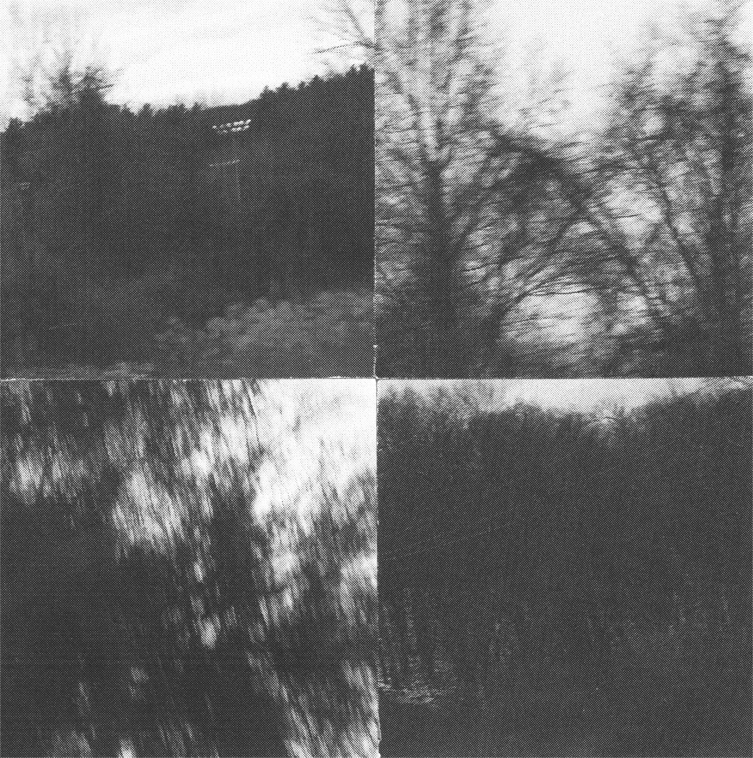 Square_Collages_Trees&TallGrass_Crop&Trim.png