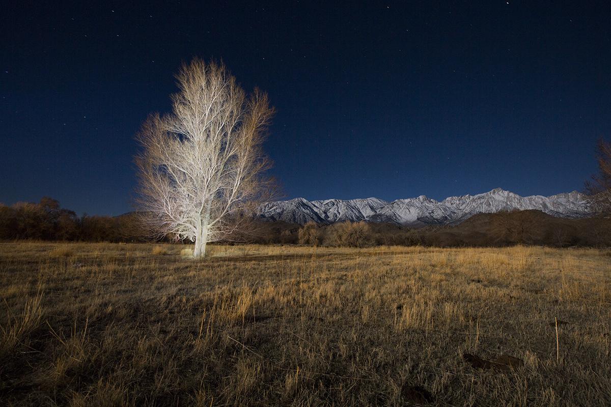 Lone Tree, Lone Pine CAFEtif.jpg