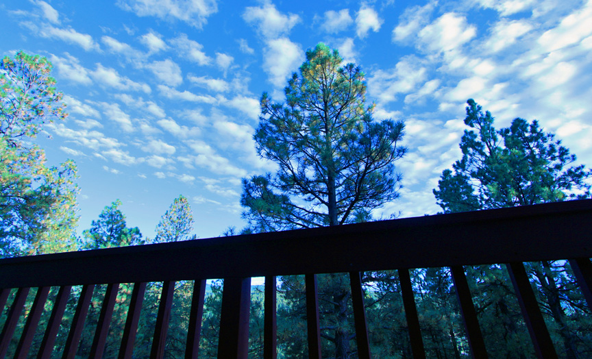 Alpine Trees and Sky View14.jpg