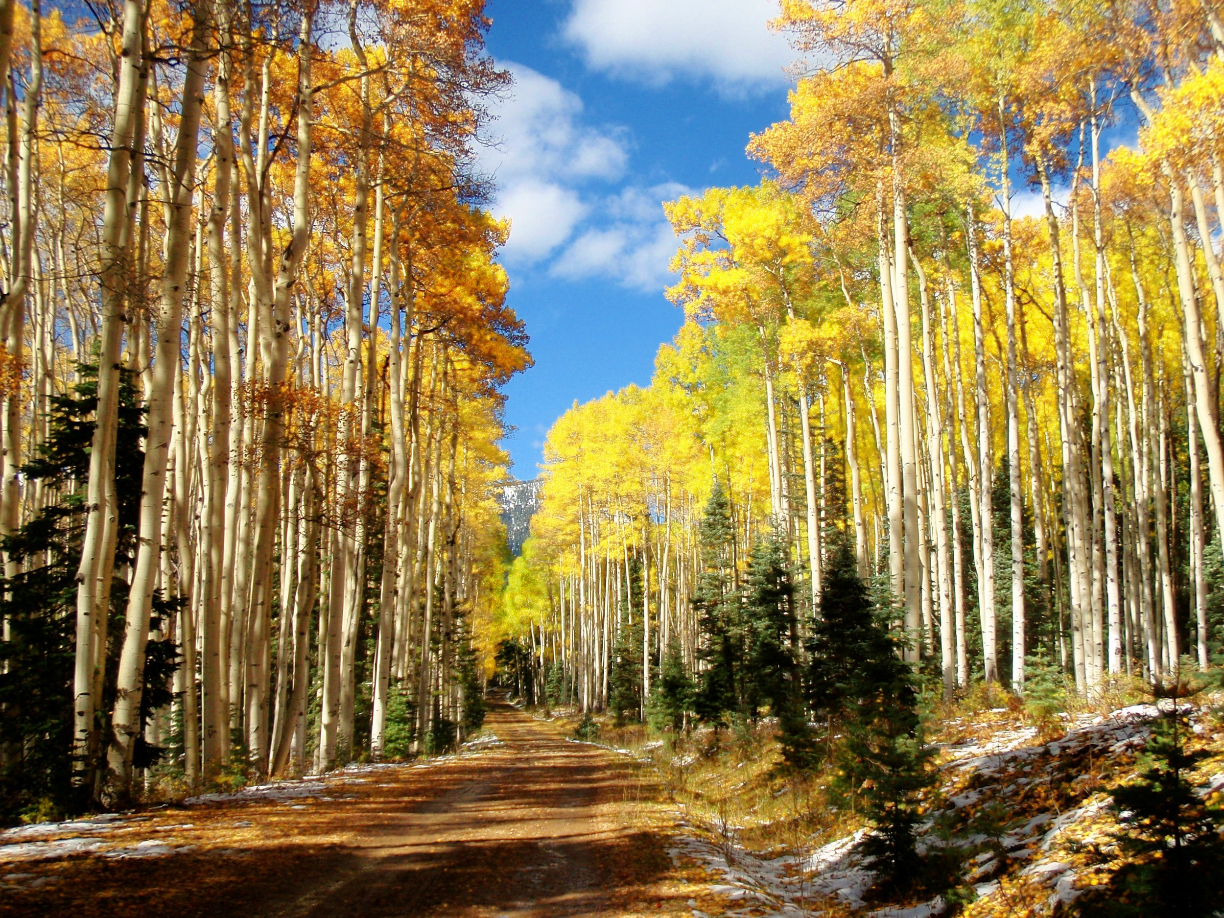 Fall Pagosa East-Fork-22.jpg