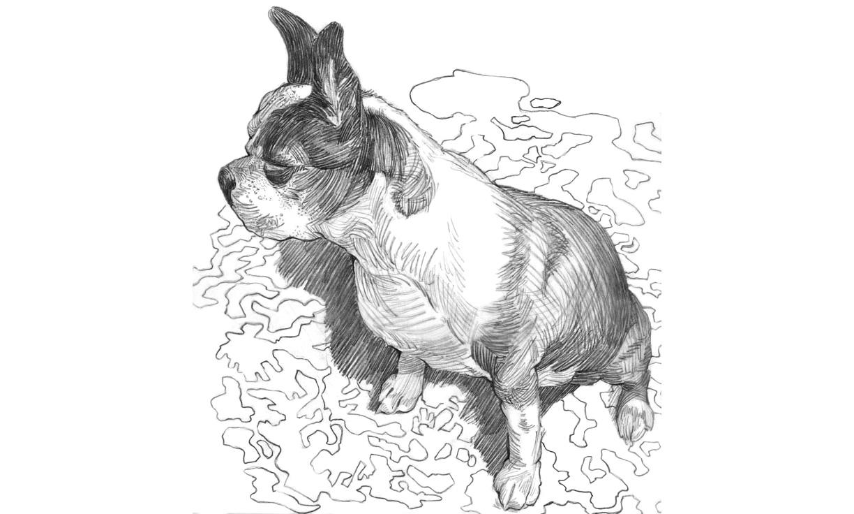 Terrier, Graphite Pencil