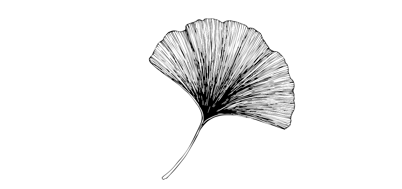 Gingko leaf.png