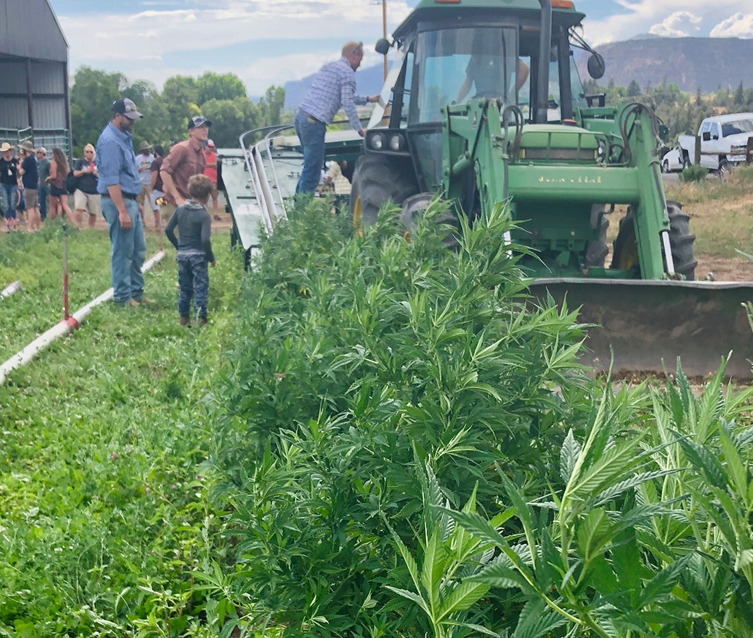 Hemp grows more popular in area (7/18)