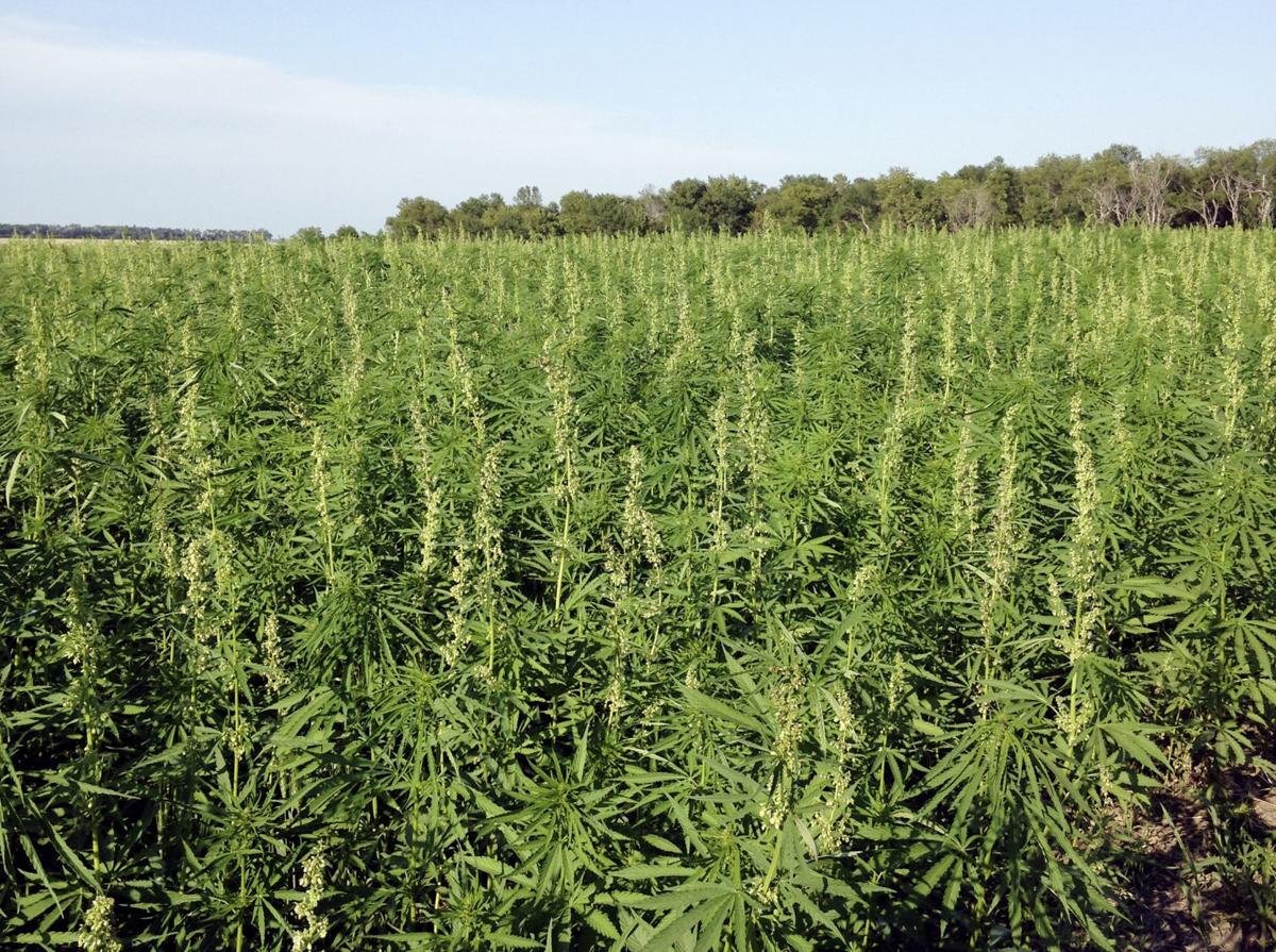 Growers, hemp advocates waiting impatiently for ag permits with passage of Nebraska bill (6/19)