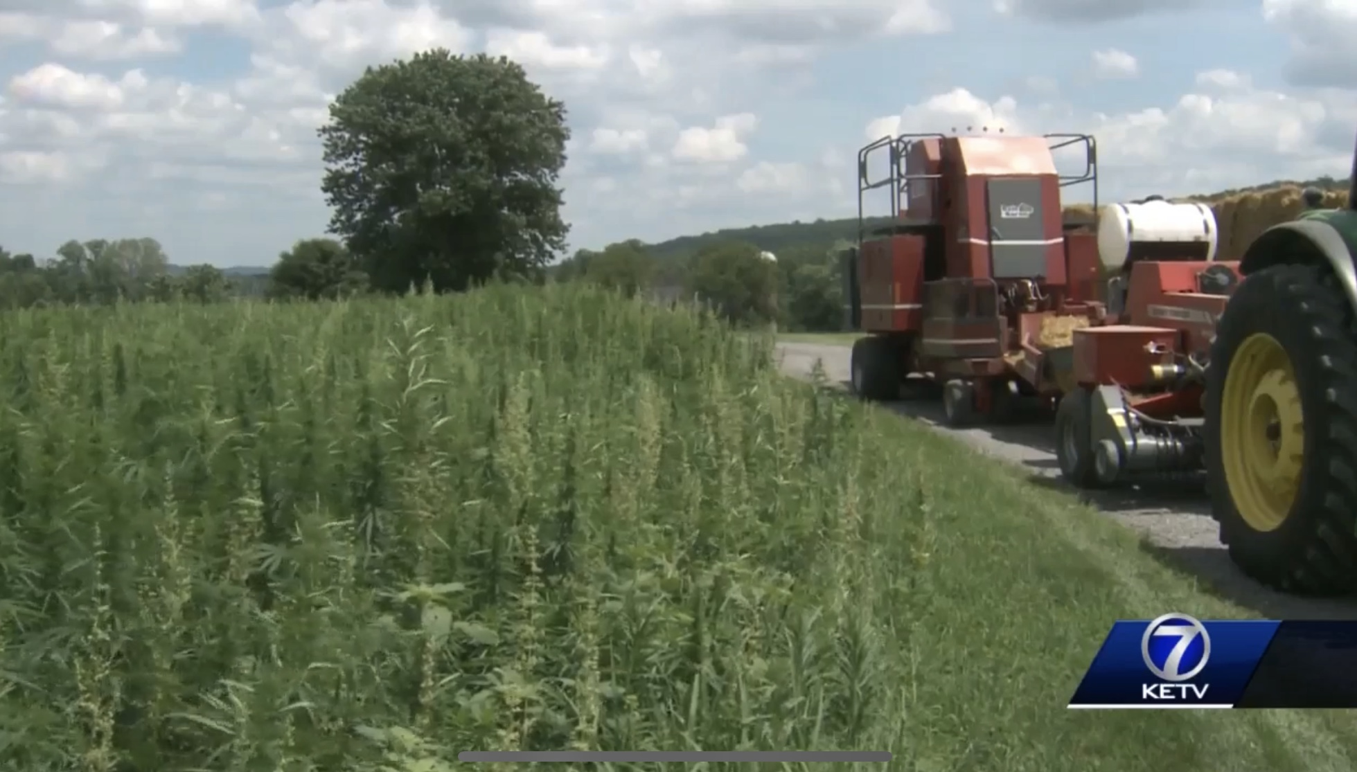 """HEMP HOPEFULS CALL STATE'S 2019 RESEARCH PLAN A """"SLAP IN THE FACE"""" (7/28)"""
