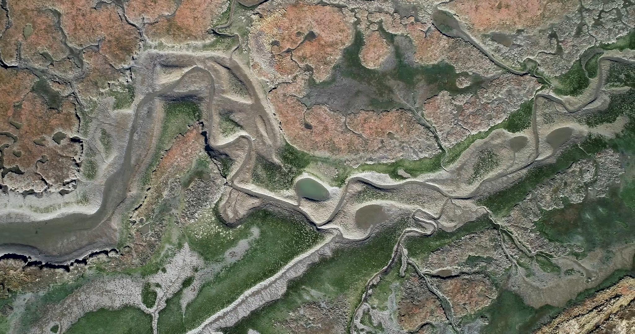 Mud Bay Salt Marsh (1).png