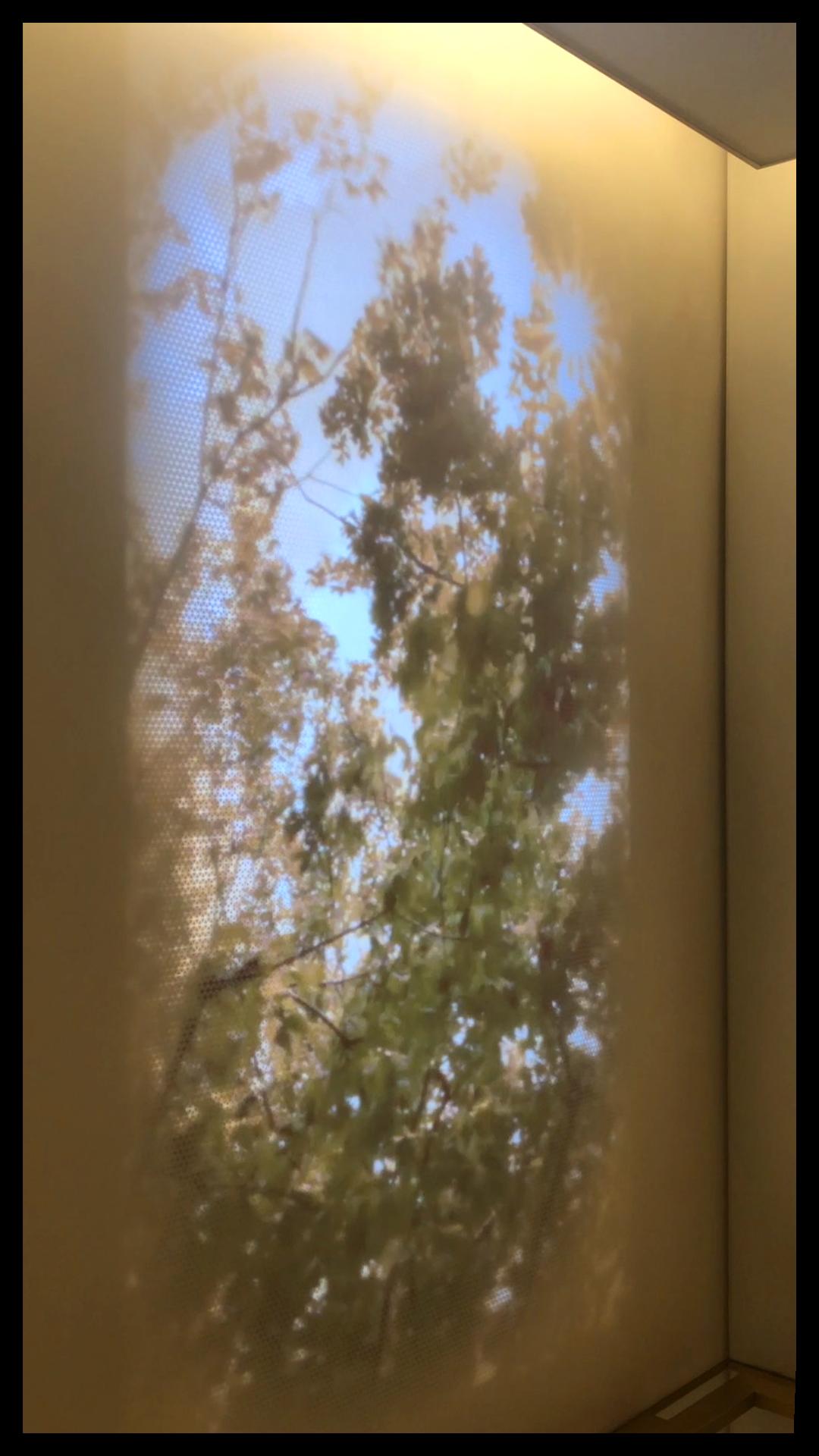 Joe Burke_Sun Through Tree.png