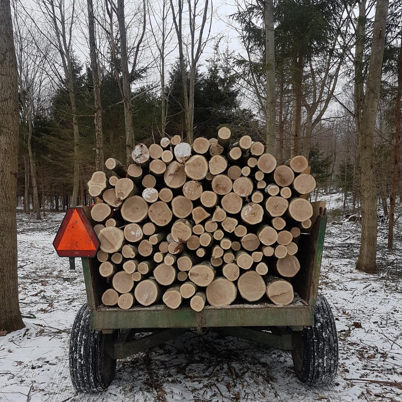 Pinède ; n.f. Plantation, forêt de pins. N'importe quel dictionnaire étymologique vous donnera cette définition, mais pour nous, elle représente beaucoup plus.La Pinède,c'est notre opportunité de faire le lien entre l'arbre et l'assiette grâce à des champignons de première qualité.Les champignons que nous produisons sont le résultat de nos efforts, conjugués à ce que la forêt nous apporte: de l'eau, du bois, de l'ombre et du temps -