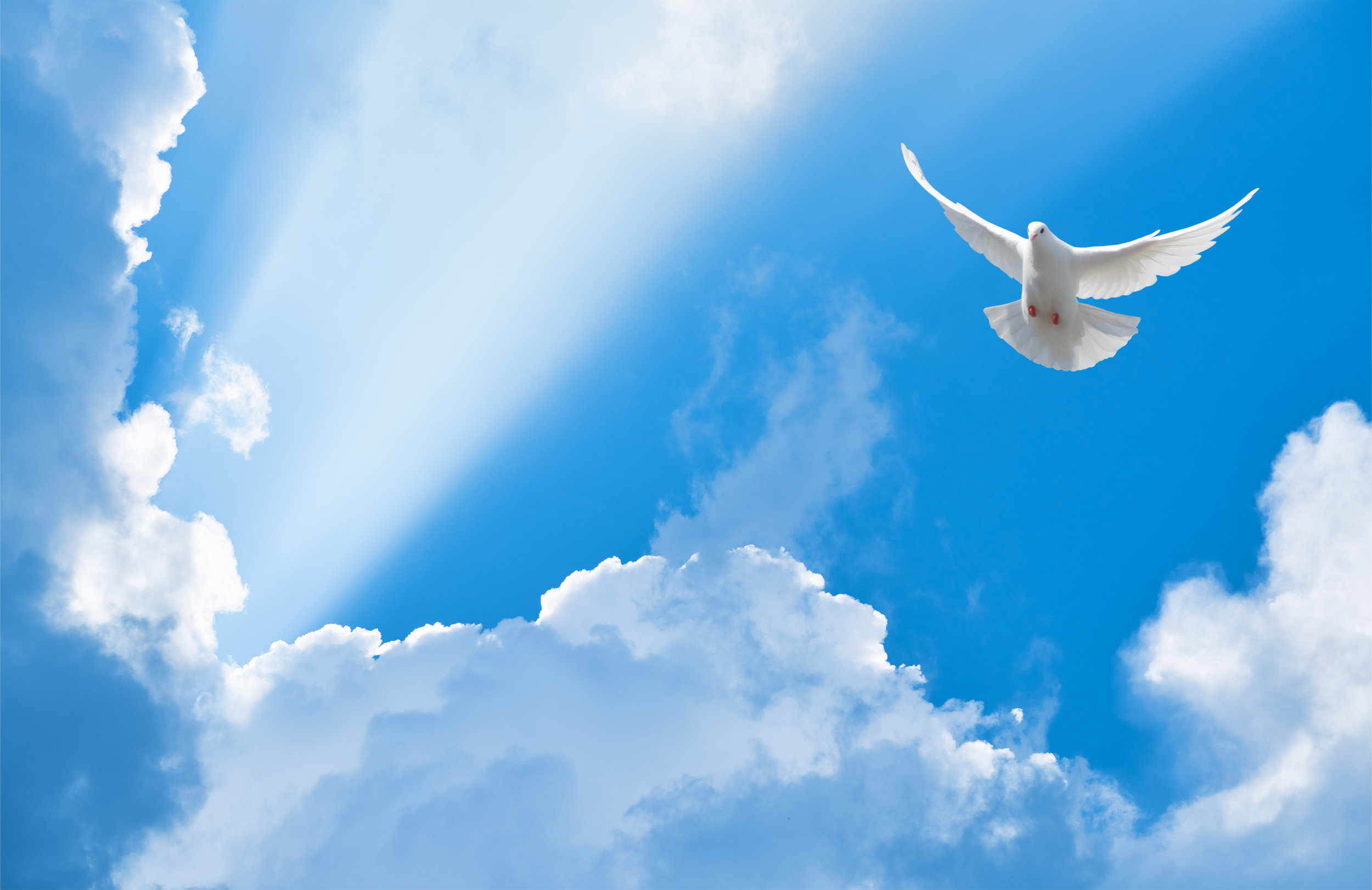 "Nooooo, the Holy Spirit is not a dove.  However, in Luke 3:22, the Word says, ""And the Holy Spirit descended  in bodily  form like a dove upon Him…"" and, Matthew 3:16 says, ""When He had been baptized, Jesus came up immediately from the water; and behold, the heavens were opened to Him, and He saw  the Spirit of God descending like a dove  and alighting upon Him.  This where the representation of the ""dove"" originates.  We believe in the Holy Spirit who proceeds from the Father and the Son, and is of the same essential nature, majesty, and glory, as the Father and the Son, truly and eternally God.  I Cor. 2:10-12"